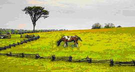 Mending Fences Equine Wellness
