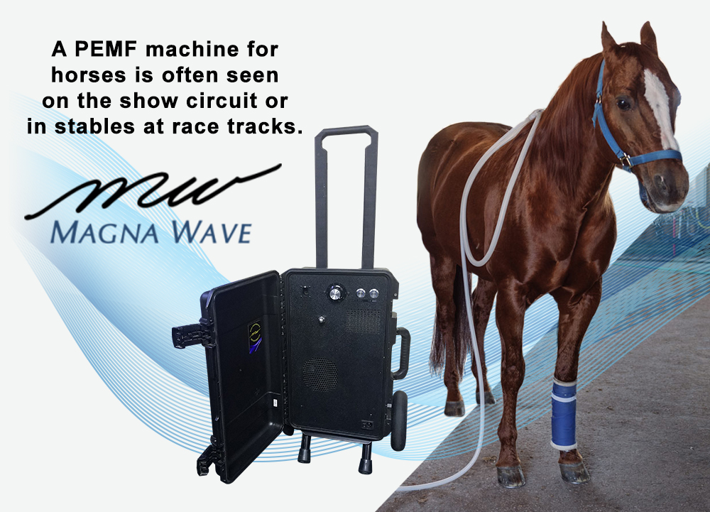 A PEMF Machine for Horses is often seen on the show circuit or in stables at race tracks.