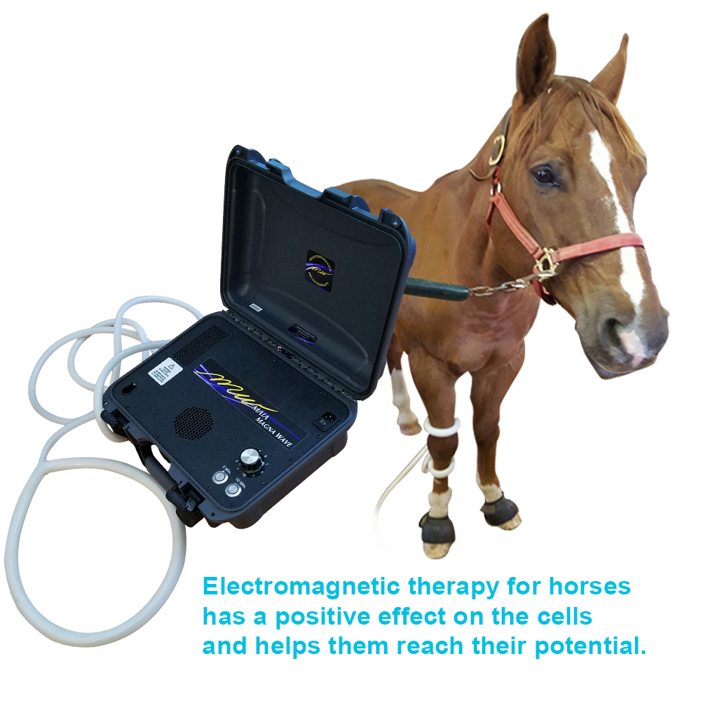 Electromagnetic therapy for horses has a positive effect on the cells and helps them reach their potential.