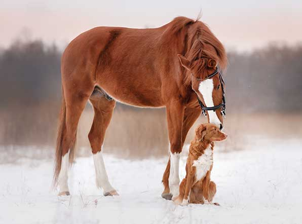 How to keep horses and pets healthy in the winter with Magna Wave PEMF