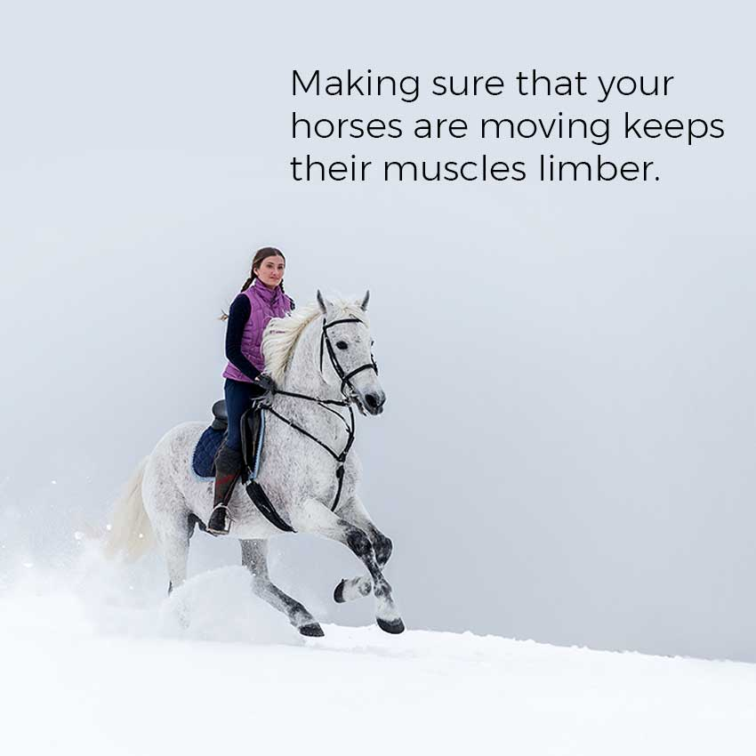 Making sure that your horses are moving keeps their muscles limber.