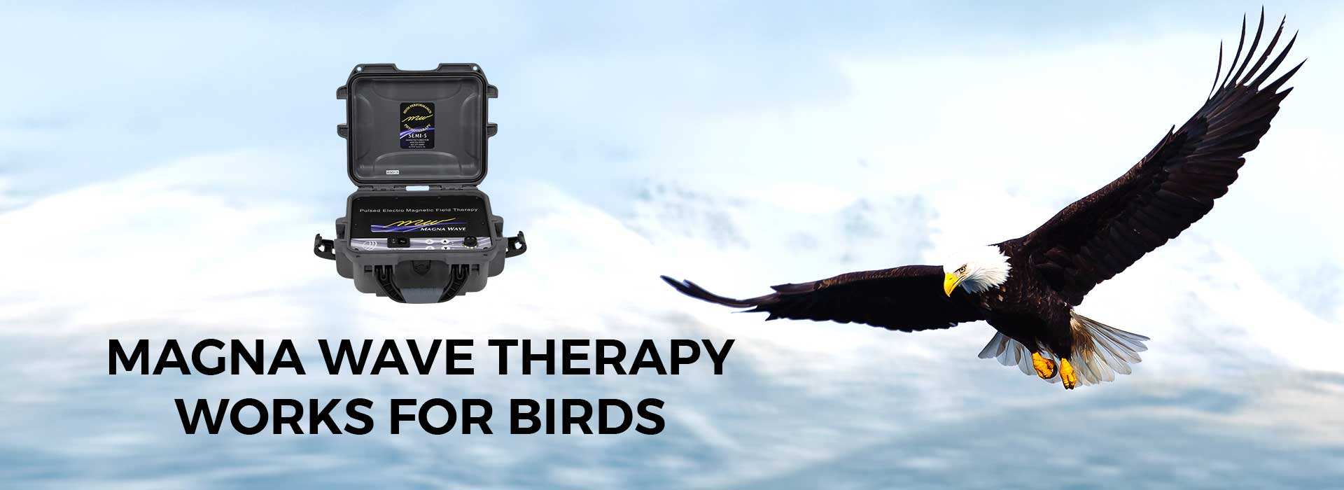 Magna Wave Therapy Works for Birds