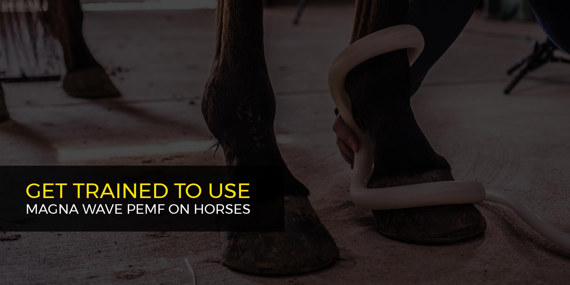 Get Trained to Use Magna Wave PEMF on Horses