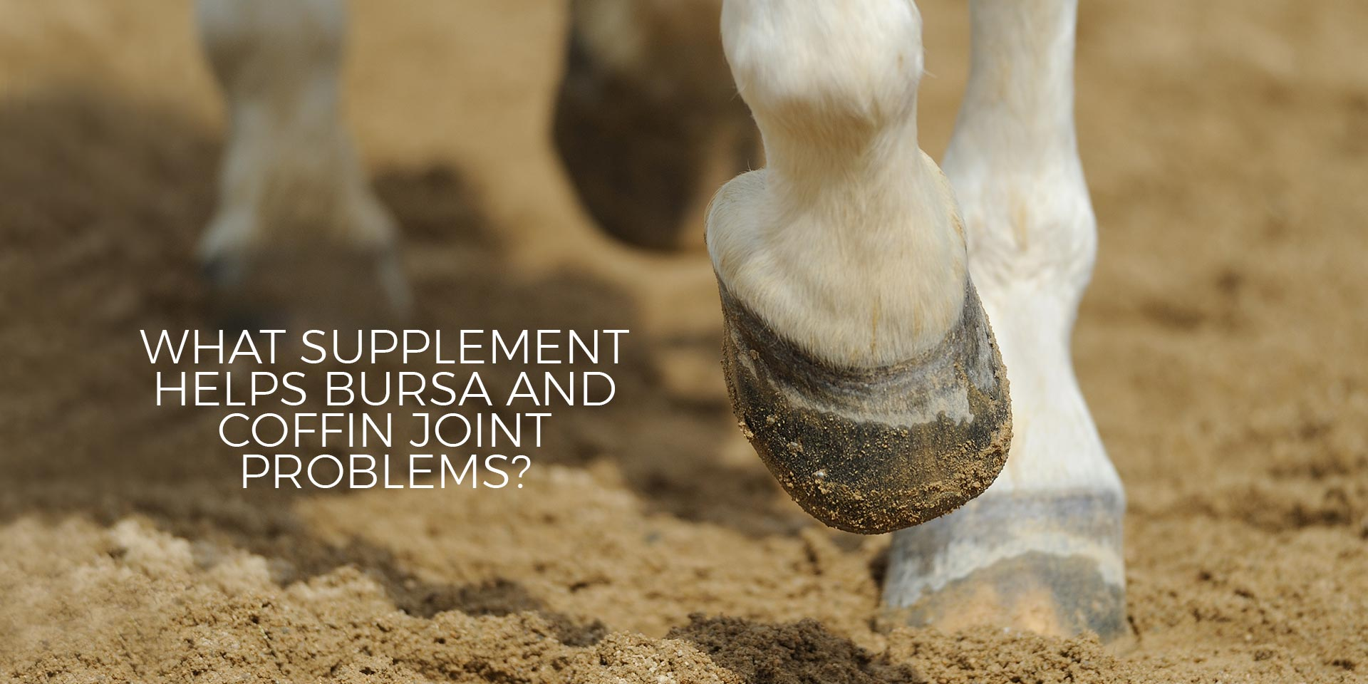 What Supplement Helps Bursa and Coffin Joint Problems?