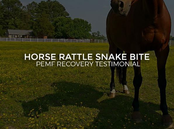 Horse Rattle Snake Bite - PEMF Recovery Testimonial