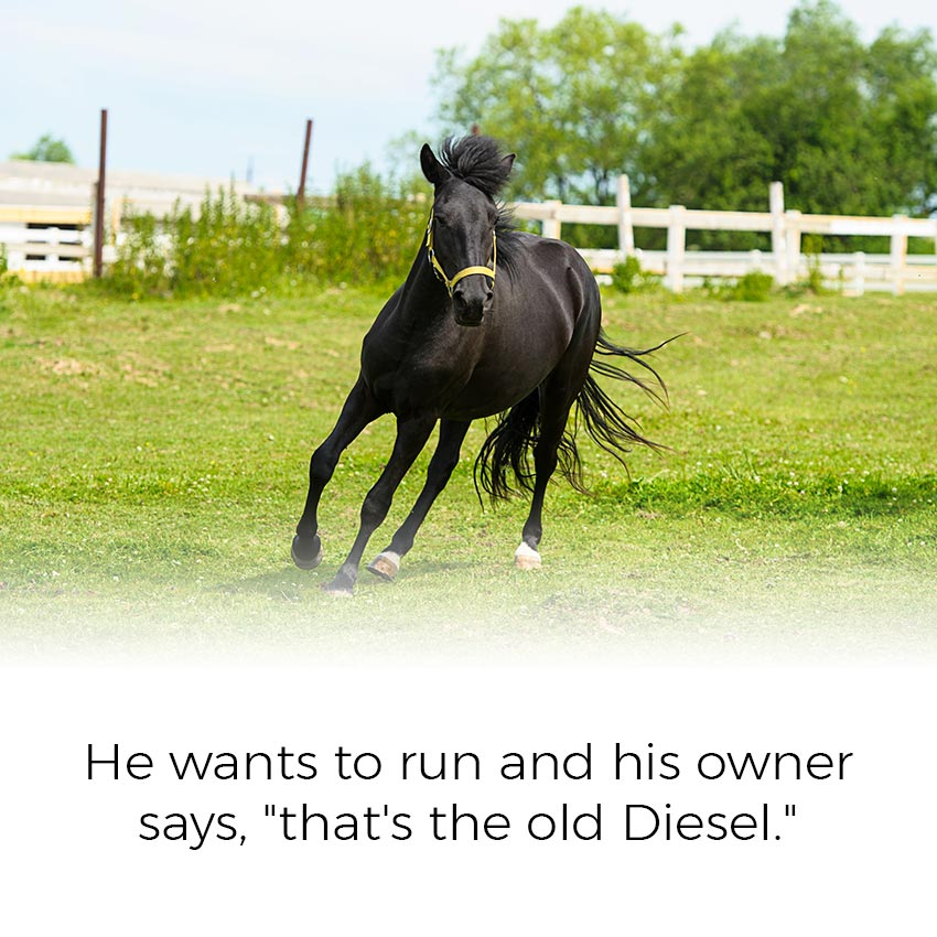 "He wants to run and his owner says, ""that's the old Diesel."""