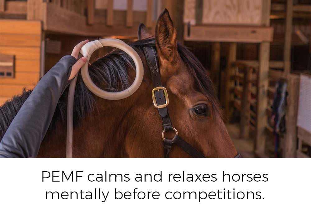 PEMF calms and relaxes horses mentally before competitions.