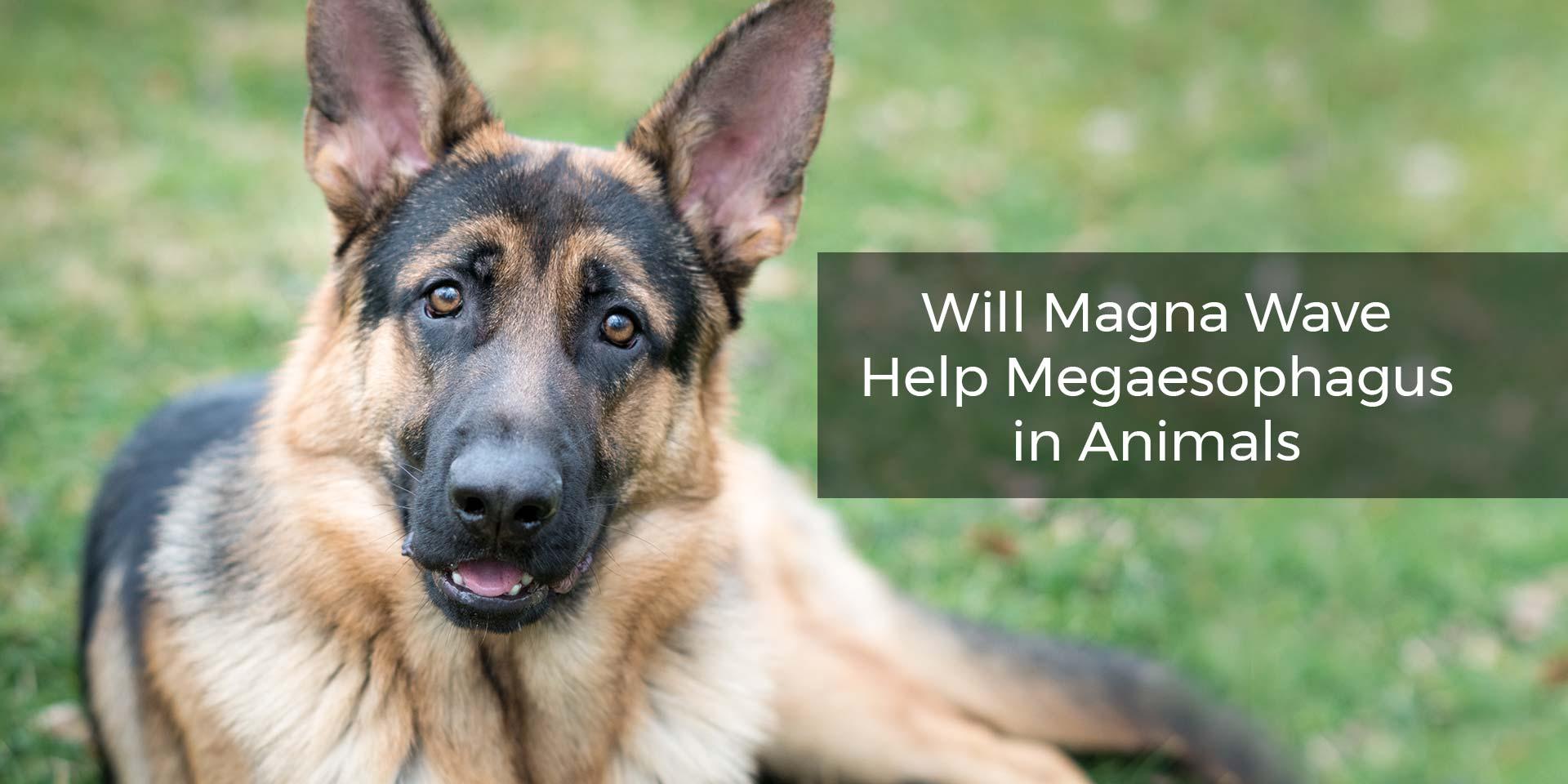 Will Magna Wave Help Megaesophagus in Animals?