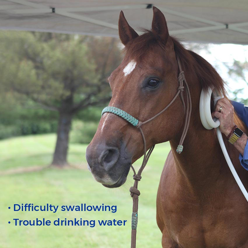 Difficulty swallowing. Trouble drinking water.