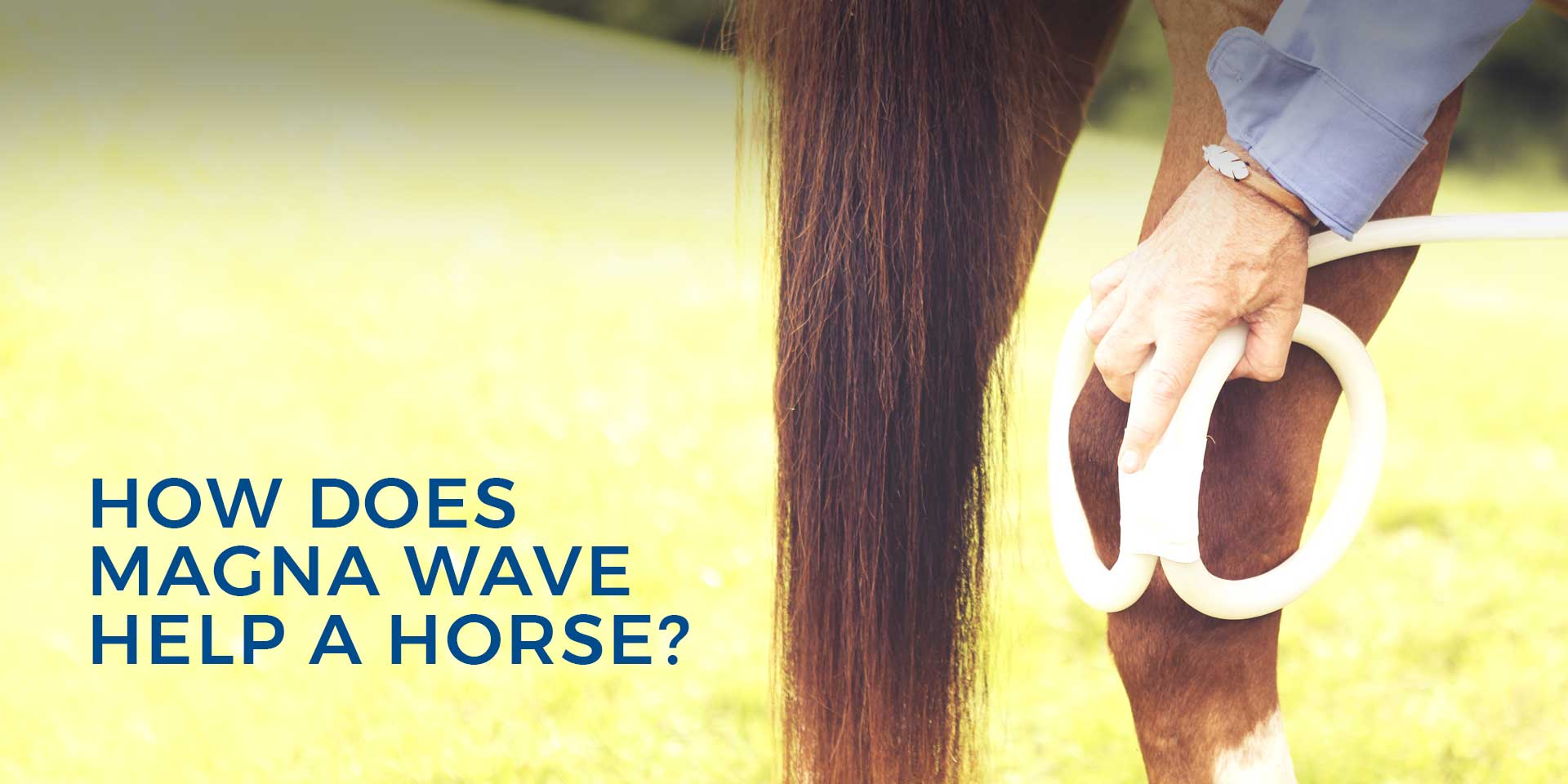 How Does Magna Wave Help a Horse?