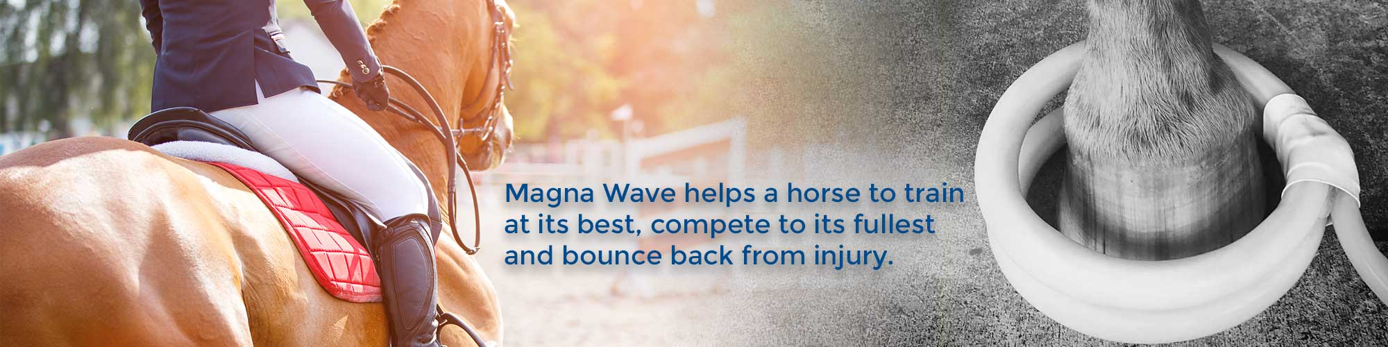 Magna Wave helps a horse to train at its best, compete to its fullest and bounce back from injury.