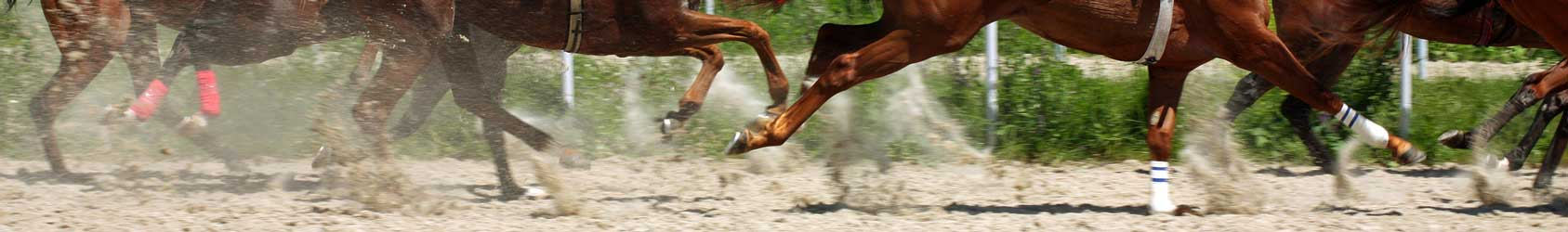 PEMF Devices for Horses