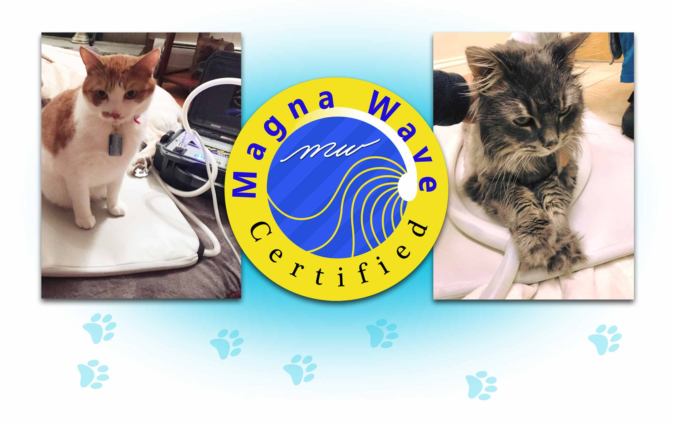 Magna Wave PEMF for Cats is a Certified, Natural Treatment for Cats