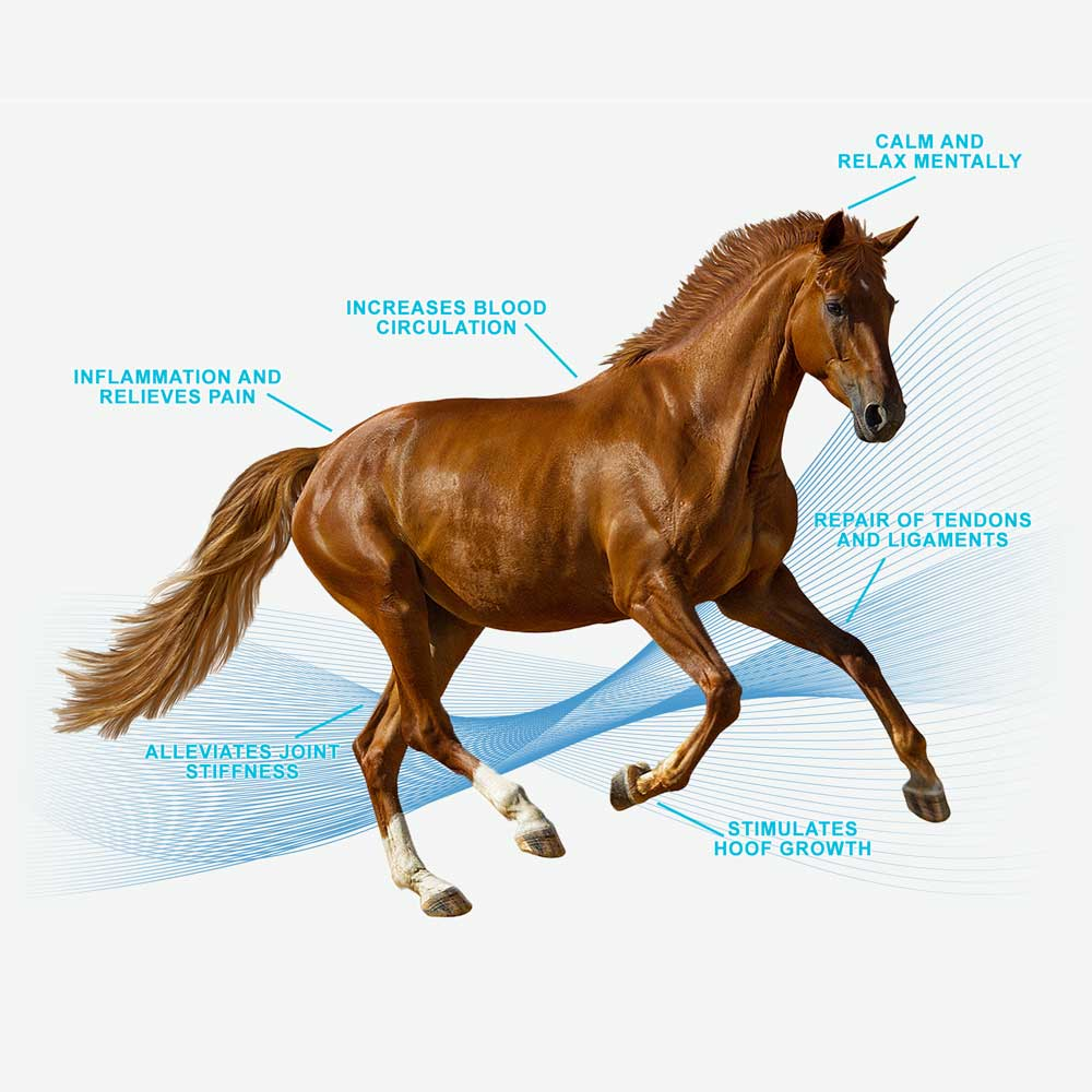 Diagram of Horse Magna Wave PEMF Machine for Horses
