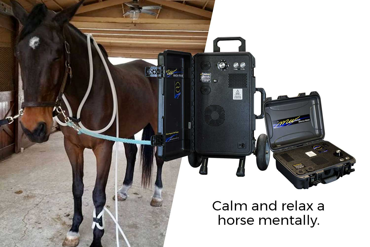 Calm and relax a horse mentally.