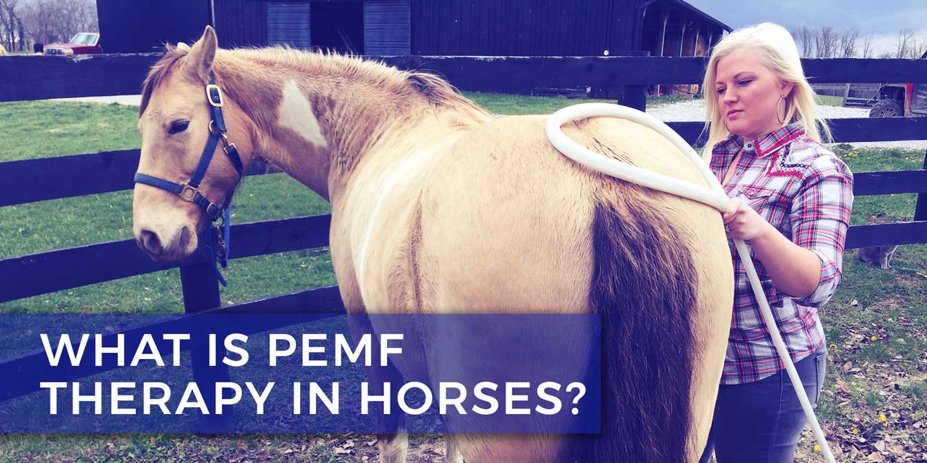 What is PEMF Therapy in Horses?