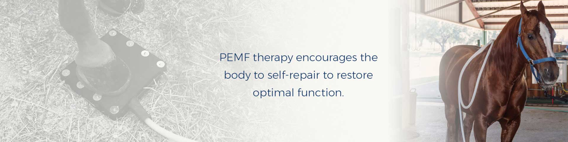 PEMF therapy encourages the body to self-repair to restore optimal function.