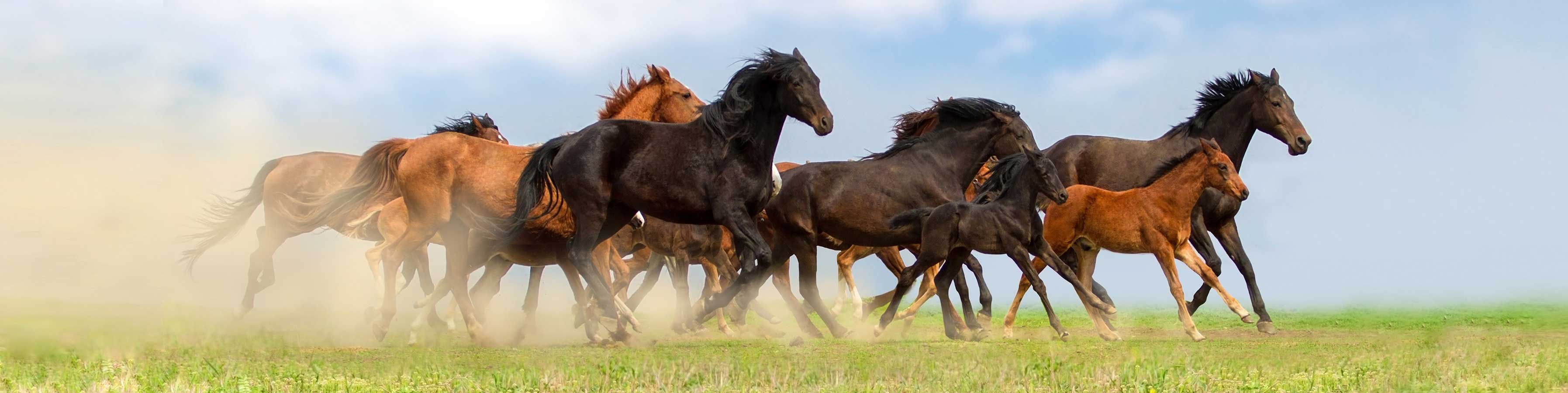 Get your horse Running again with Magna Wave Best Degenerative Joint Disease Treatment