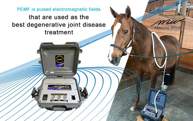 Magna Wave PEMF is the Best Degenerative Joint Disease Treatment for your horse