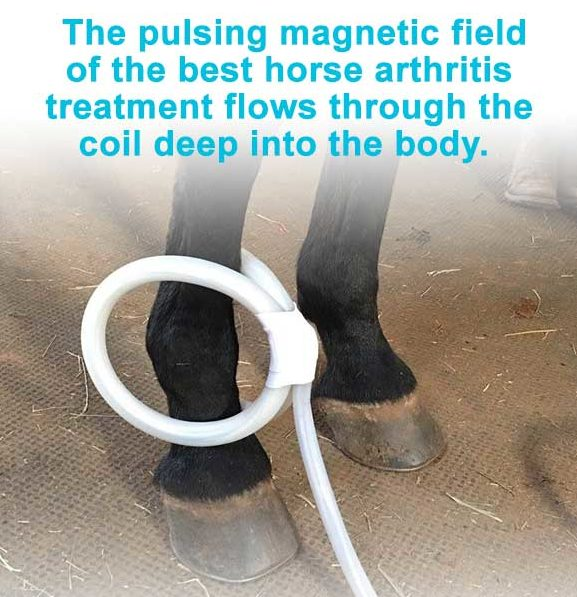 The pulsing magnetic field of the best horse arthritis treatment flows through the coil deep into the body.