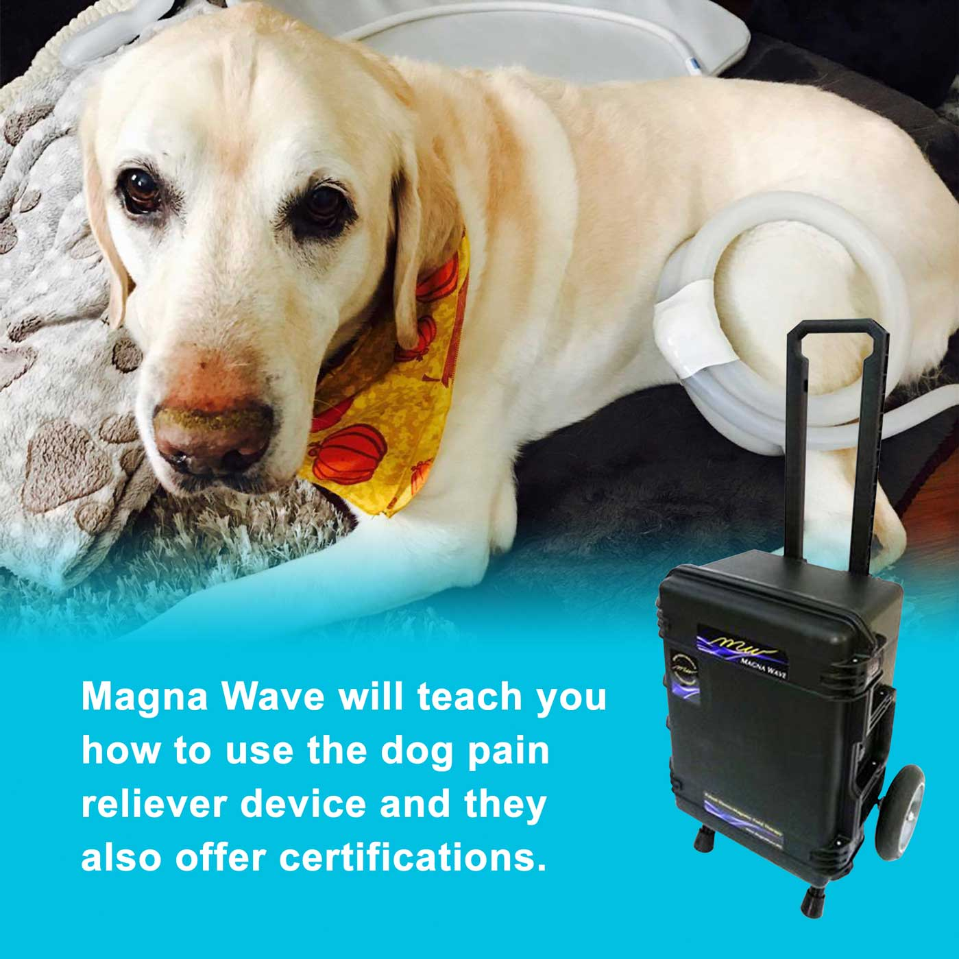Magna Wave will teach you how to use the dog pain reliever device.
