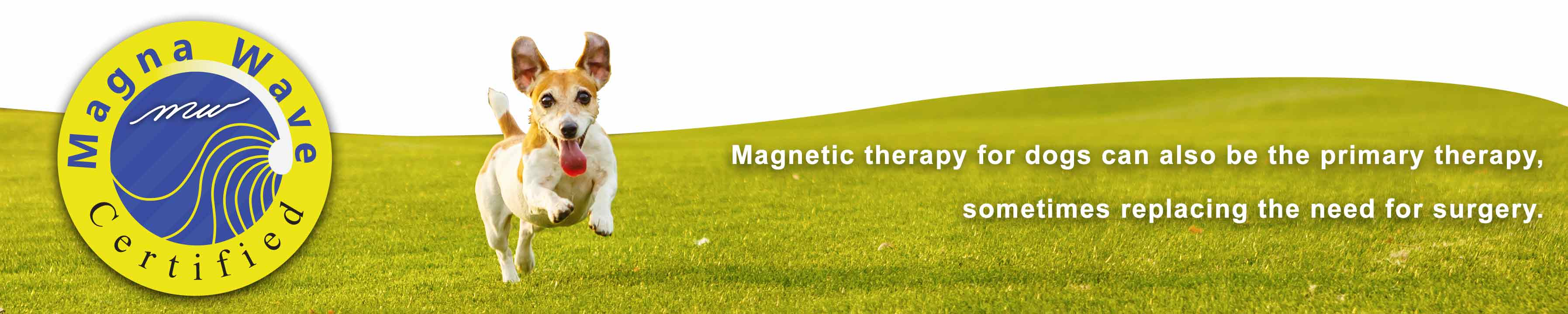 Magna Wave - Magnetic Therapy for Dogs Replacing Surgery