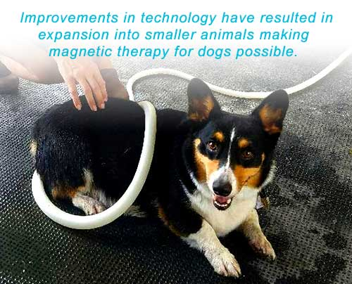 Magna Wave - Magnetic Therapy for Dogs Technology Smaller Animals