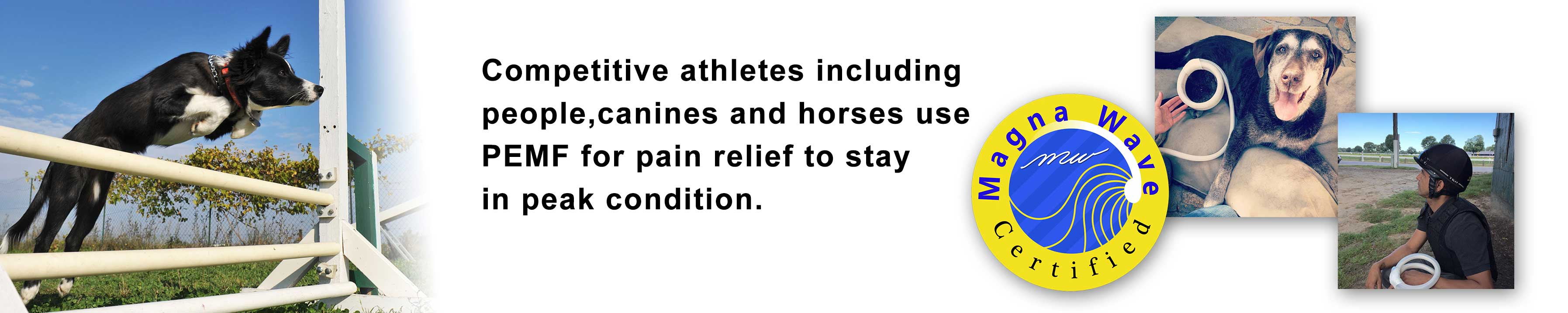 Competitive athletes including people, canines and horses use PEMF for pain relief to stay in peak condition