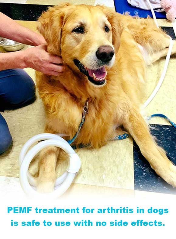 PEMF Treatment for arthritis in dogs is safe to use with no side effects.