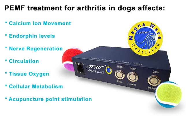 PEMF treatment for arthritis in dogs affects: calcium ion movement, endorphin levels, nerve regeneration, circulation, tissue oxygen, cellular metabolism, acupuncture point stimulation