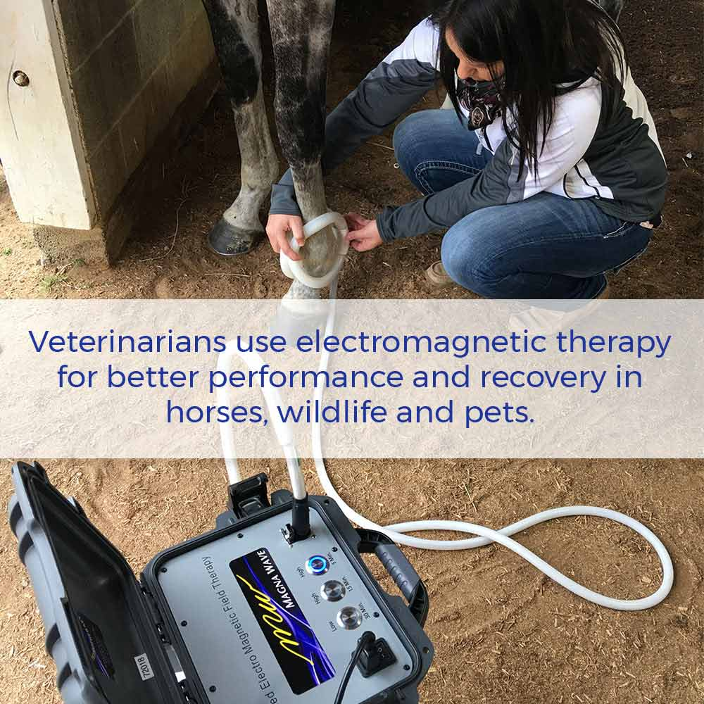 Veterinarians use electromagnetic therapy for better performance and recovery in horses, wildlife and pets.