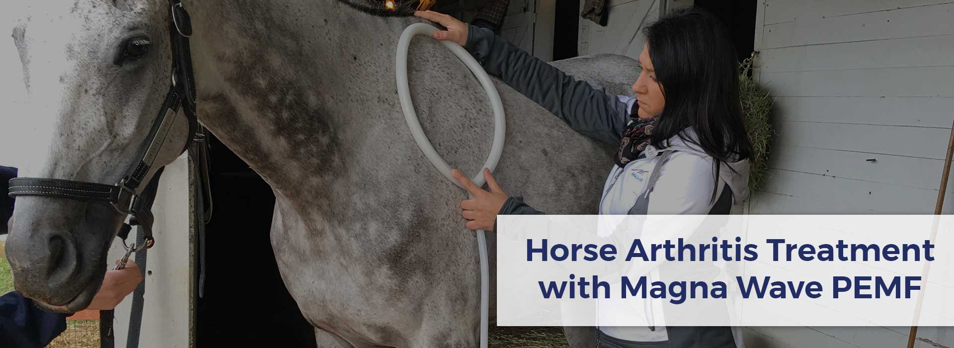 Horse Arthritis Treatment with Magna Wave PEMF