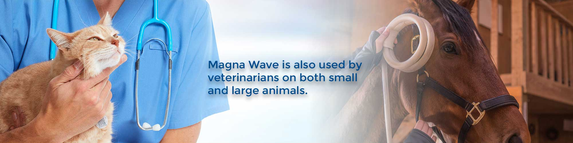 Magna Wave is also used by veterinarians on both small and large animals.