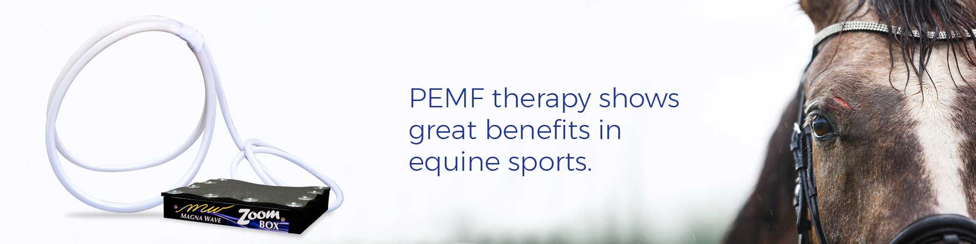 PEMF therapy shows great benefits in equine sports.