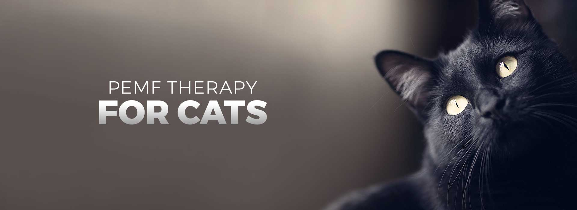 PEMF Therapy for Cats
