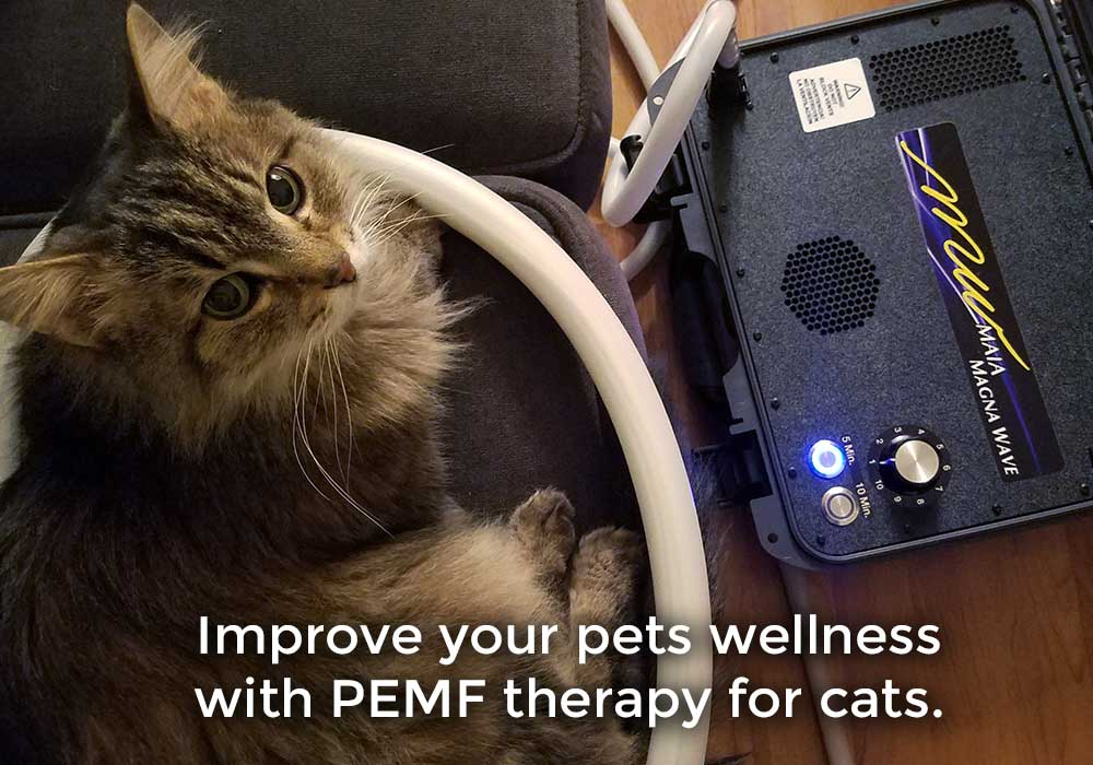Improve your pets wellness with PEMF therapy for cats.