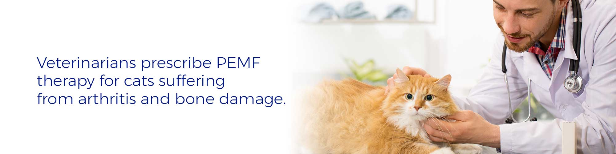 Veterinarians prescribe PEMF therapy for cats suffering from arthritis and bone damage.