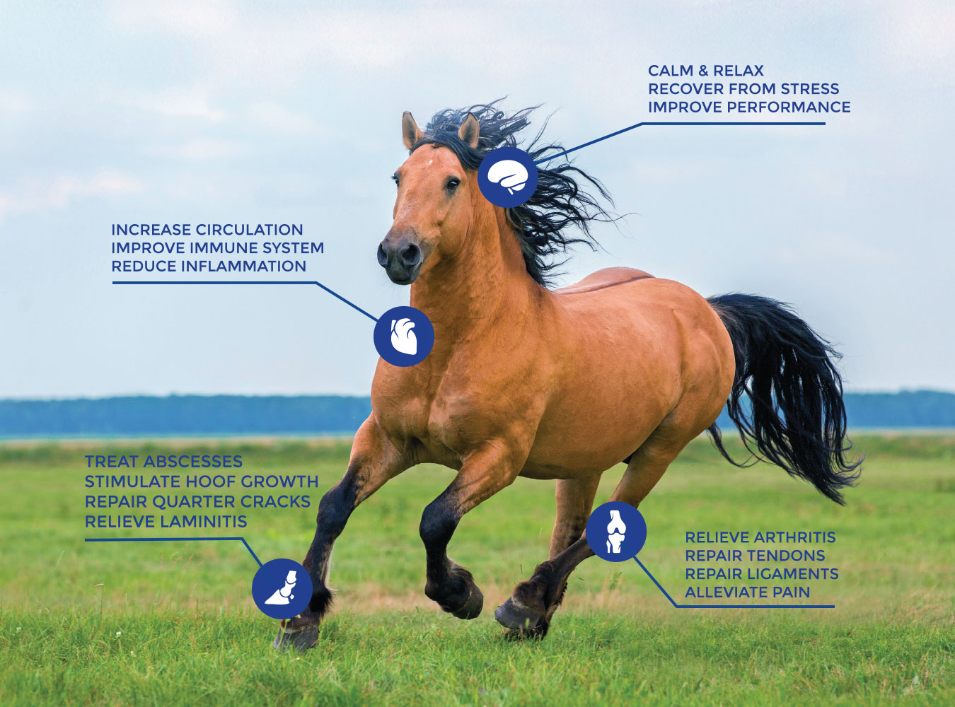 Increase Circulation, improve immune system, reduce inflammation, calm & relax, recover from stress, improve performance, relieve arthritis, repair tendons, repair ligaments, alleviate pain, treat abscesses, stimulate hoof growth, repair quarter cracks, and relieve laminitis.