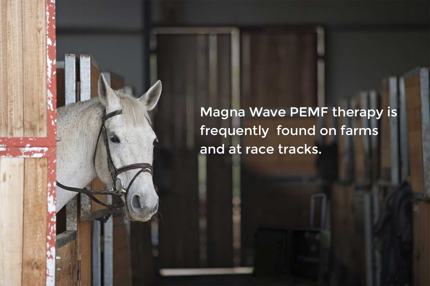 Magna Wave PEMF therapy is frequently found on farms and at race tracks
