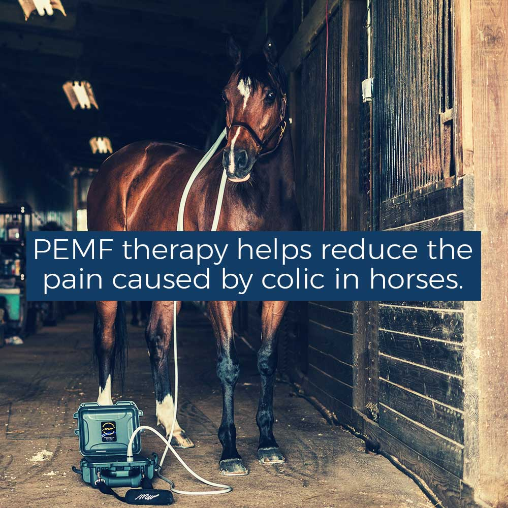 PEMF therapy helps reduce the pain caused by colic in horses