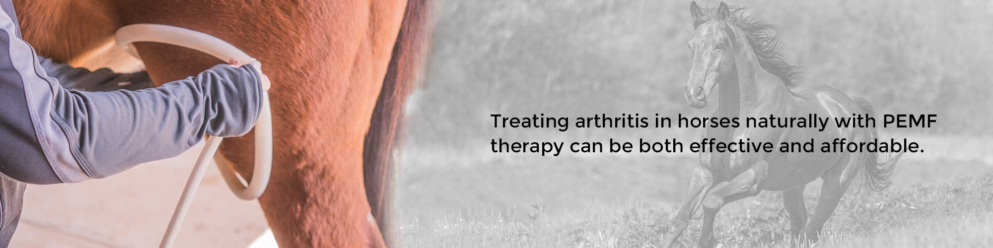 Treating arthritis in horses naturally with PEMF therapy can be both effective and affordable.