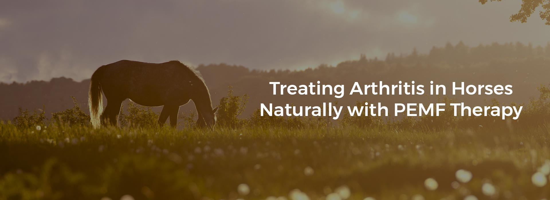 Treating Arthritis in Horses Naturally with PEMF Therapy