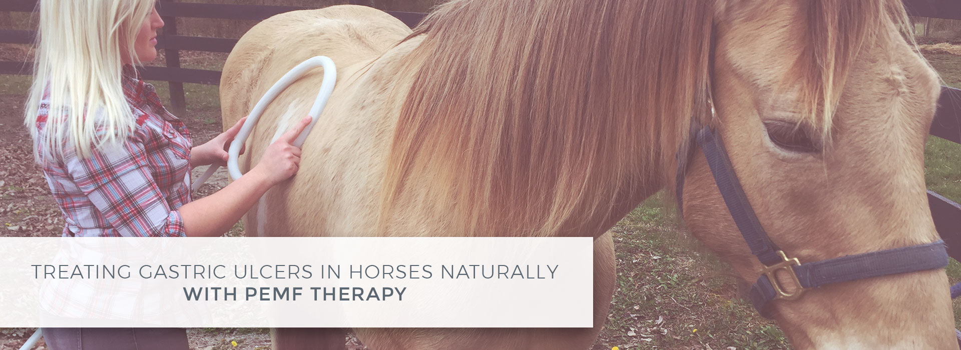 Treating Gastric Ulcers in Horses Naturally with PEMF Therapy