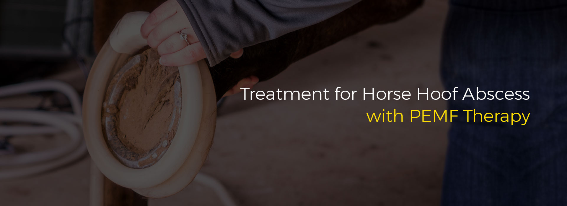 Treatment for Horse Hoof Abscess with PEMF Therapy