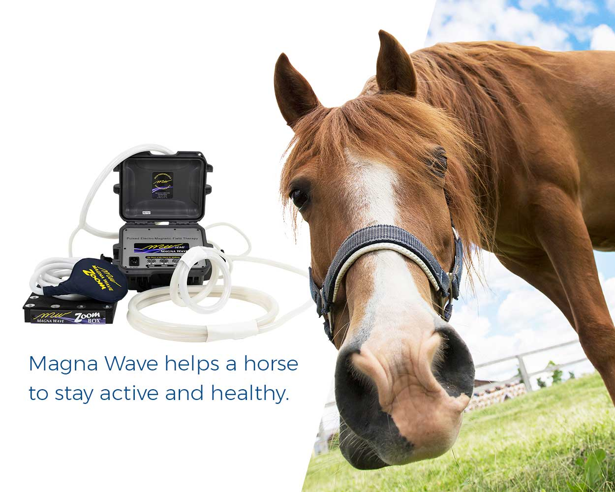 Magna Wave helps a horse to stay active and healthy